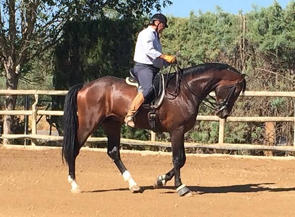 Adiestramiento del caballo en la Escuela Hípica Riopudio. Escala de entrenamiento alemana de Reiner Klimke.