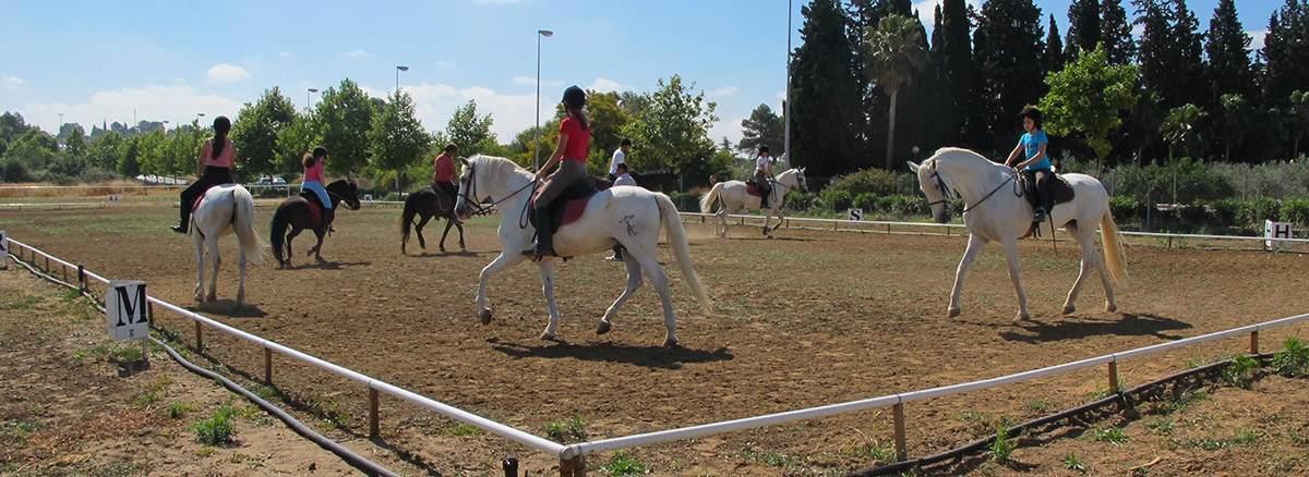 Clases de equitación. Cursos de hípica en verano, con ponis y caballos, para todas las edades.